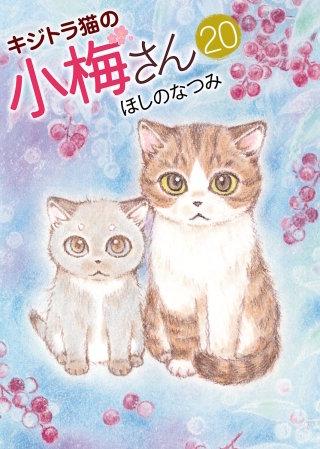 キジトラ猫の小梅さん(20)