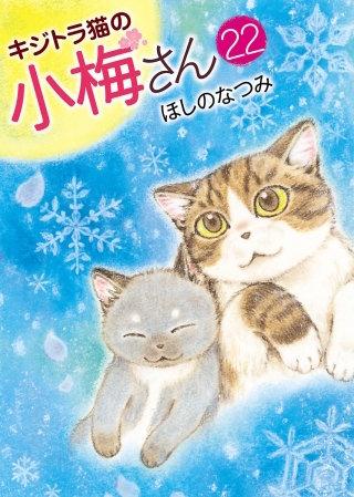 キジトラ猫の小梅さん(22)
